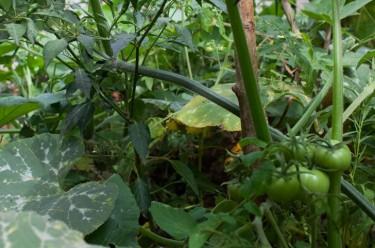 organic-farming-two1