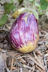 eggplant-996610_640.jpg